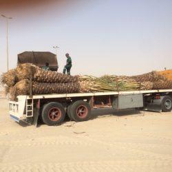 بلدية الخفجي تقوم بزراعة النخيل في ميدان الملك عبد الله